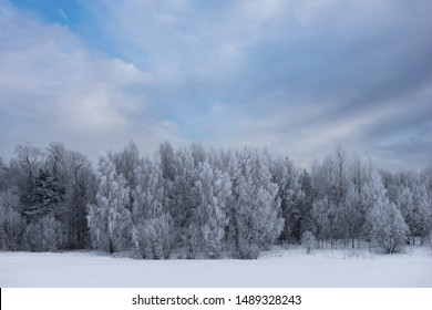 Winter landscape with trees covered in rine frost on blue sky