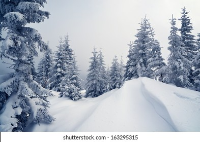 Winter landscape with trees covered with snow in a mountain valley