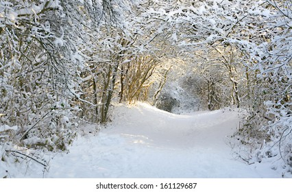 winter landscape with trees covered with snowflakes creating a tunnel of snow leading to sunlight