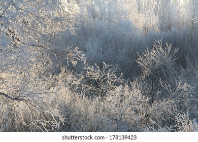 Winter landscape trees and dry grass in the forest covered with frost near the field the beautiful light of the setting sun