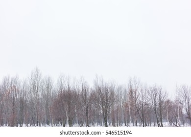 Winter landscape. trees and evening sky