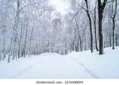 Winter landscape, trees in the forest after a heavy snowfall, road in the forest.