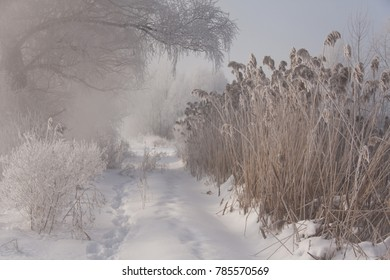 winter landscape with trees and grass covered with hoarfrost  in the morning
