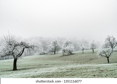 winter landscape with trees and meadows