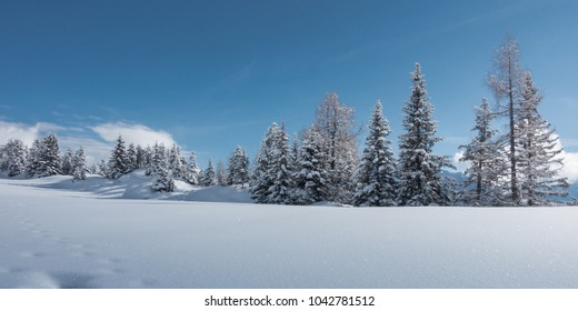 Winter landscape with trees row as panorama