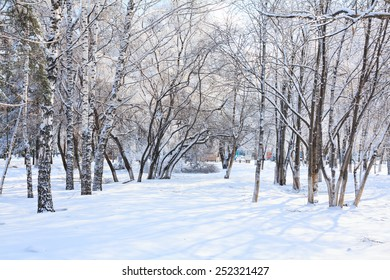 Winter landscape with trees and snow in city park.