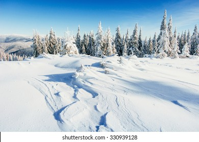 winter landscape trees snowbound