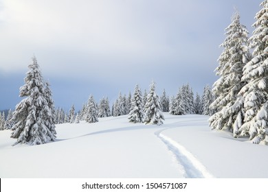 Winter landscape with trees in the snowdrifts, the lawn covered by snow with the foot path.