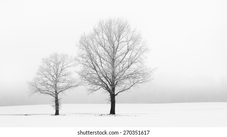 Winter landscape with two lonely, snow-covered deciduous trees in the middle of the field.