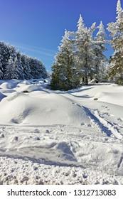 Winter landscape of Vitosha Mountain, Sofia City Region, Bulgaria