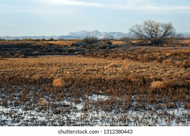 Winter landscape in Whitewater Draw in Southern Arizona