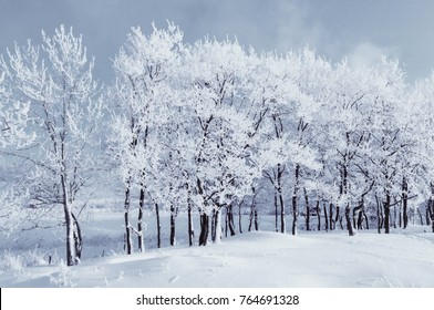 Winter landscape. Winter wonderland with forest snowy trees