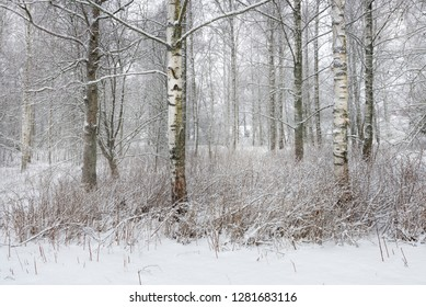 Winter landscape.First snow covered forest. - Shutterstock ID 1281683116