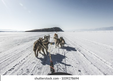 Winter landscape,frozen Lake Baikal, Siberia, Russia. Beautiful snowy wallpaper: fine sunny day with blue sky, six winter Siberian huskies tided in a one gear, dogs resting after the long run.