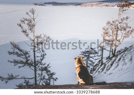 Winter Landscapefrozen Lake Baikal Siberia Russia Beautiful Stock