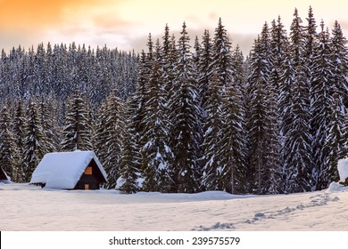 Winter landscape,pines and cottage covered with snow, Pokljuka, Slovenia
