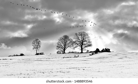 winter, landscapes with birds flying, tribute to Ansel Adams, walking in the forest, walking in the park, black and white artistic photography of mountain landscapes and fog with sun rays,