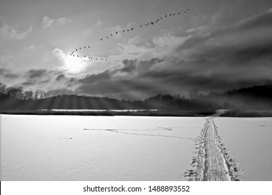 winter, landscapes with birds flying, tribute to Ansel Adams, walking in the forest, walking in the park, Series of black and white artistic photography of mountain landscapes and fog with sun rays,