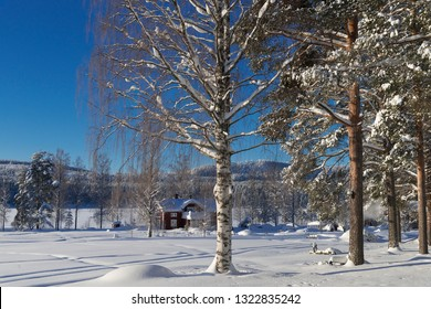 the winter in Lapland, Norrbotten, north of Sweden, trees with snow
