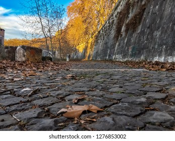 Winter leaf on the road near the Tiber river in Rome