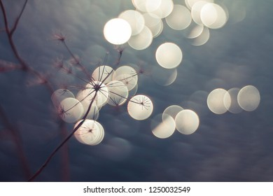 Winter lights - Natural background with soft bokeh