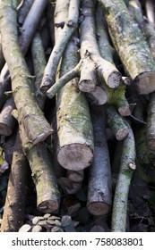 The Winter Logs