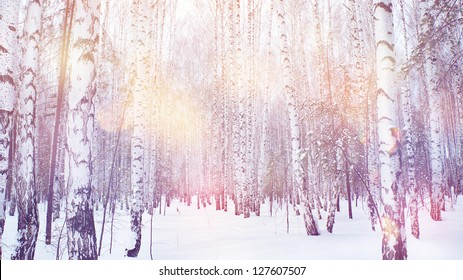winter magic birch grove
