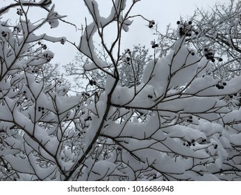 Winter magic russian snowy forest with snow on branches