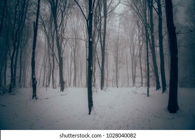 Winter in the misty forest with dense fog.
