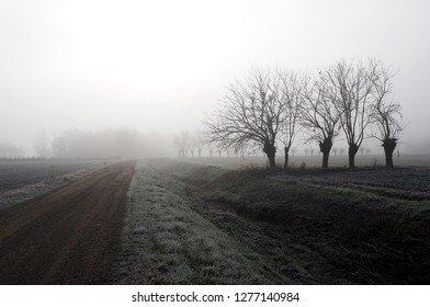 Winter misty morning in plain of northern Italy  with rows of bare mulberry trees and a country road among the frost fields