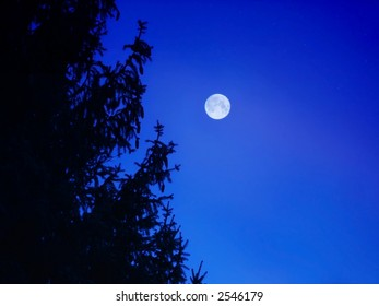 Winter moon with silhouette of a pine tree.