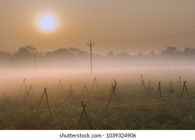 Winter morning - fog over a green agriculture field with sun rising in the background.