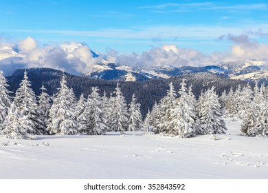 In the winter morning, high in the mountains green trees, covered with snow, are waking up, hidden from human eyes under the the blue sky.