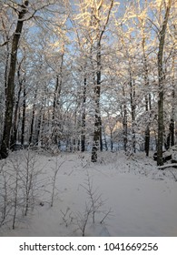 winter morning with snow covered trees in Connecticut