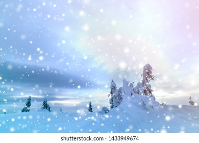 Winter mountain blue landscape. Small spruce trees in deep snow on bright cloudy sky copy space background.