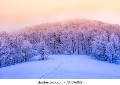 Winter mountain forest in snow, sunset, Bieszczady, Poland