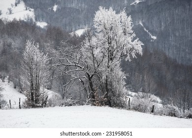 Winter mountain landscape with fir trees on the hill. Carpathian Mountains