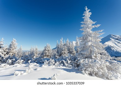 Winter mountain landscape, pine forest covered with snow, Tatry Mountains, Poland