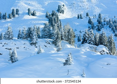 Winter mountain landscape with snowy fir on slope.