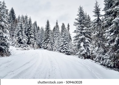 Winter mountain landscape. Winter mountain trail among the trees in the forest.