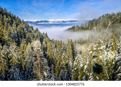 winter mountains banner vacation background with snow covered pine trees aerial view