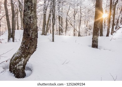 Winter mountains beautiful sunrise. Inside the beautiful winter forest to Klak hill in Mala Fatra mountains in Slovakia, sunlight in the background. Near town Bojnice and Prievidza.