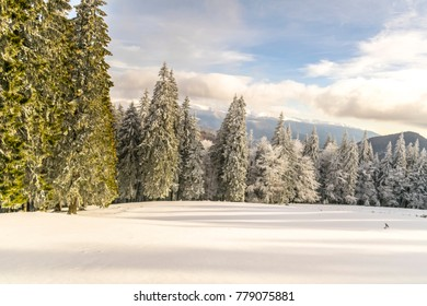 winter mountains with forest
