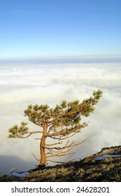Winter in mountains. Isolated pine above the clouds on the top of Crimean mountains, Crimea peninsula, Ukraine