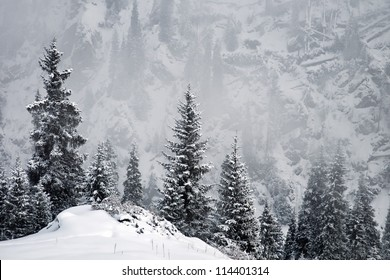 Winter in the mountains and windbreak after Hurricane