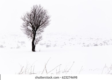 winter in murgia national park . This and others images are in premium collection  (getty images, adobe stock....)  https://www.eyeem.com/search?q=giuseppe+schiavone+&sort=relevance