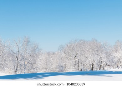 Winter natural landscape, the white trees after snowfall.