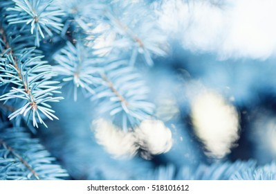 winter nature christmas tree branch blurred background