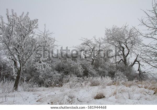 Winter nature in Czech Republic.