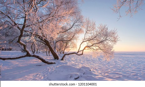 Winter nature landscape in frosty clear morning. Amazing snowy trees on shore of ice lake covered by snow in sunlight. Wonderful winter scene. Calm january. Hoarfrost on branches in december. Xmas